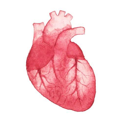 Coherencia cardiaca: ¿Qué es y cómo se aplica?