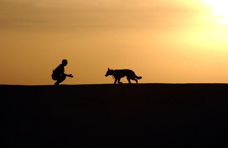 superar el miedo a los perros
